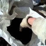 Как использовать биогумус