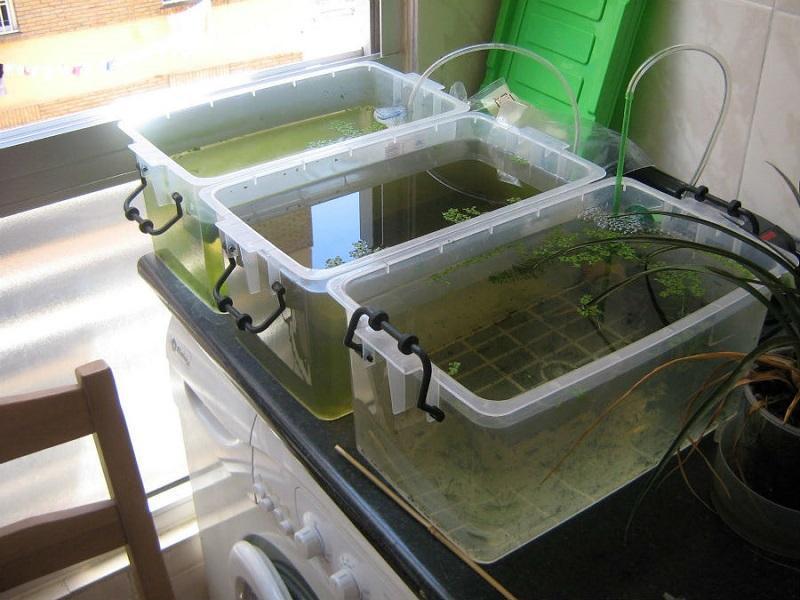 оптовая продажа аквариумных рыбок