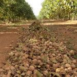 Территория для выращивания орехов