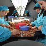 Персонал для орехового бизнеса