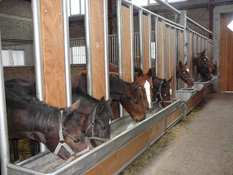 Выгодно ли разводить лошадей