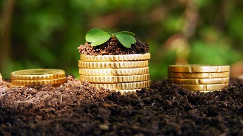 Сельское хозяйство как бизнес с нуля