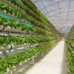 Выгодный и рентабельный бизнес в сельском хозяйстве: теплицы