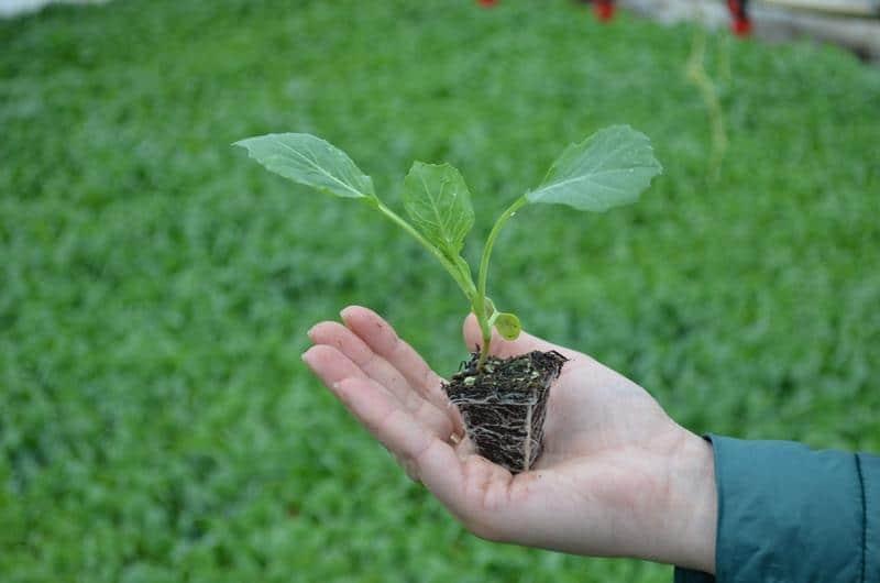 Как открыть бизнес по выращиванию рассады